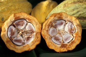 Open cocoa pods.